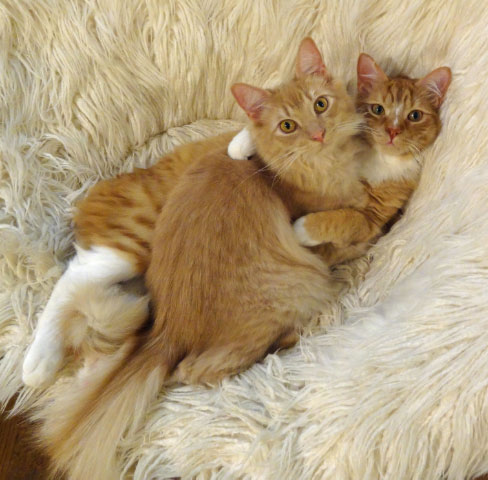 Milo & Toby