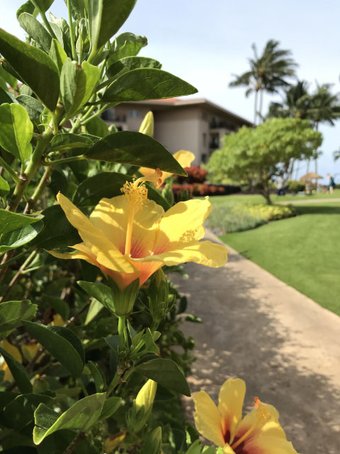Marriott Waiohai Beach Club Flowers