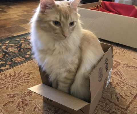 Milo In a Small Box