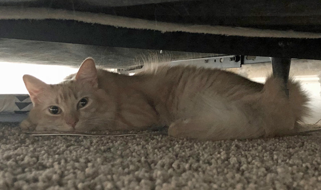 Milo Under the Bed
