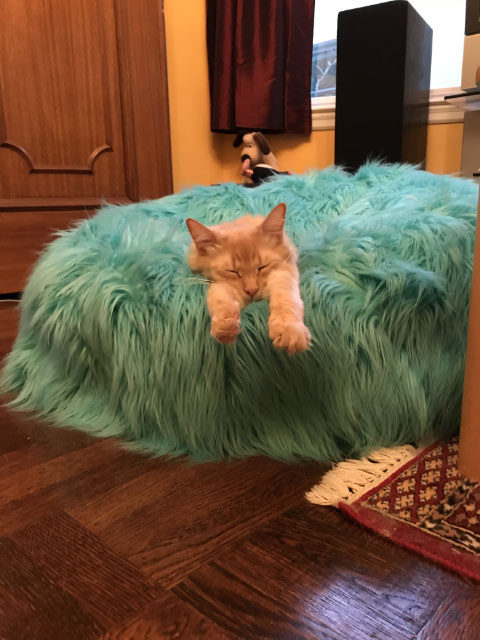Milo In Light Blue Bean Bag