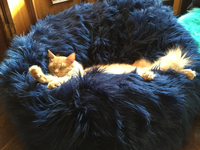 Milo in Dark Blue Beanbag