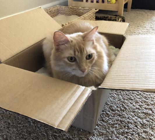 Milo In Box