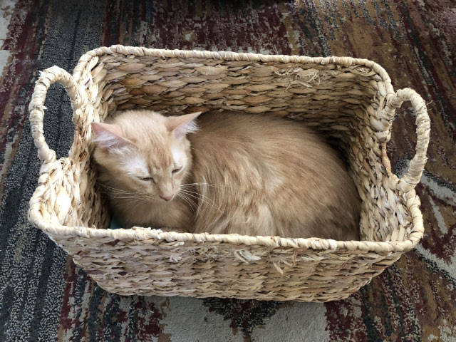 Milo In Gift Basket