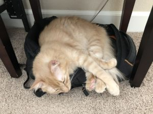 Milo On Backpack