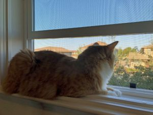 Toby On Window Sill