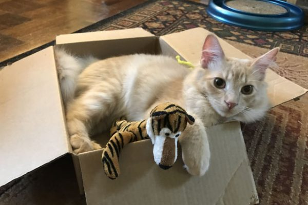 Milo in a Box
