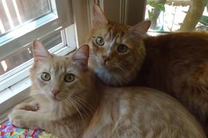 Milo + Toby