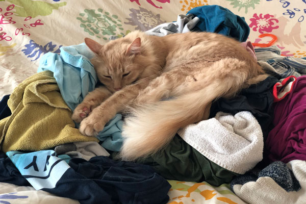 Milo Snoozes On A Laundry Pile