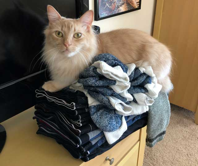 Milo sitting on a pile of folded laundry.