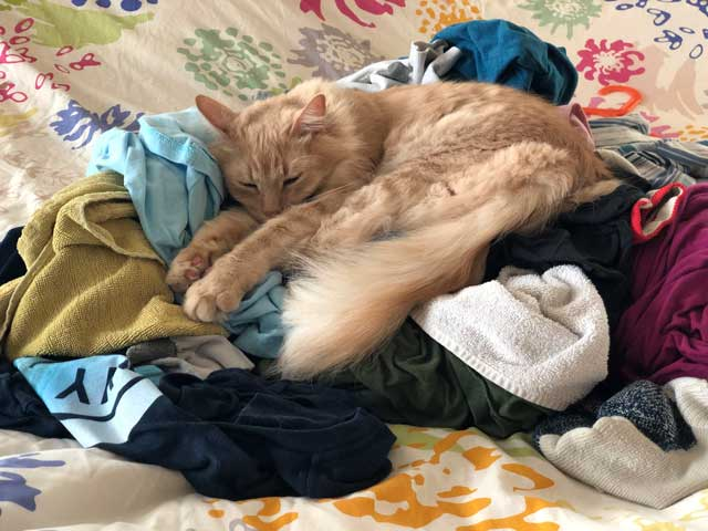 Milo naps on a laundry pile.