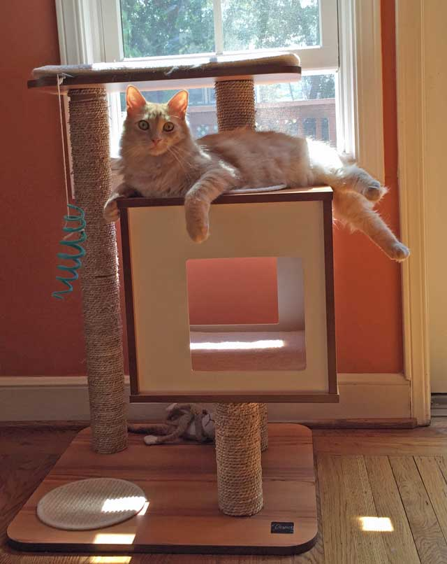 Milo on his cat tree.