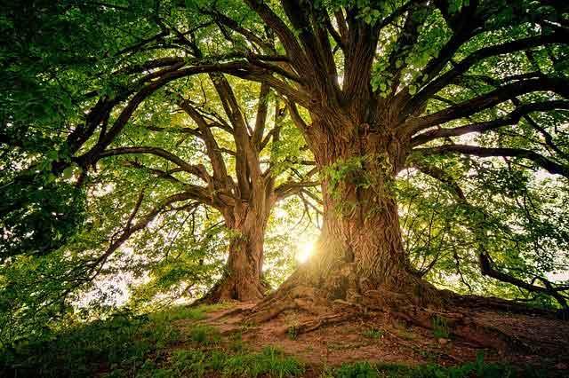 Branching trees